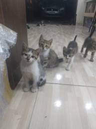 Doam-se lindos gatinhos