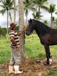 Belíssimo cavalo