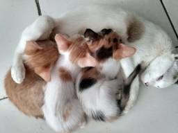 Doação de filhotes de gatos