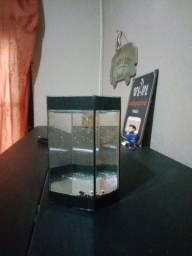 Aquario para beta sextavado