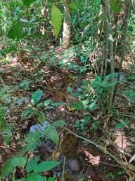 Sítio de 2 hectares (21.273m²)
