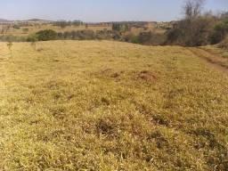 Fazenda de 65 alqueires em Jesupolis