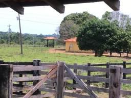 Área rural 115 hectare