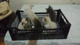 Lindos gatinhos para doações