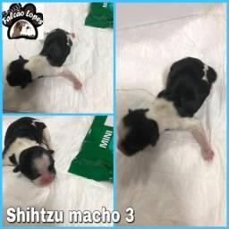 Shihtizu