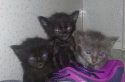 Procura-se tutores responsáveis para essas gatinhas