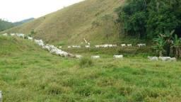 Fazenda em Silva Jardim 67 alqueires