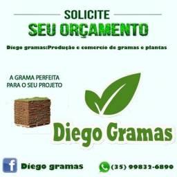 Viveiro Diego Gramas