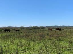 De Barbada!!! 3 hectares com fundos pro rio Caí