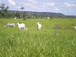 Fazenda 9.990 ha Juara MT