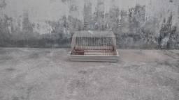 Gaiola para porquinho- da- índia ou hamster
