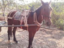 Vendo égua mansa de carroça