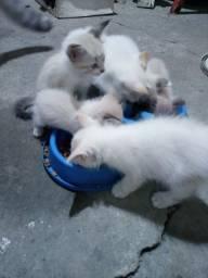 Lindos gatinhos para adoção responsável