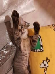 Doa-se gatinhos!