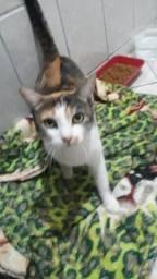 Linda gata tricolor resgatada disponível para adoção responsável