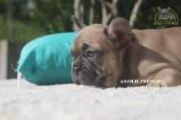 Bulldog Francês Blue