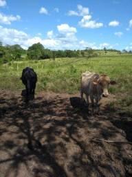 Vendo fazenda em Itaguatins