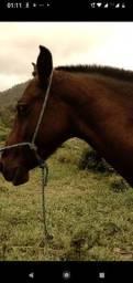 aceito troca de cavalo