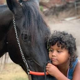 Cavalo mangalarga marchador 6 anos