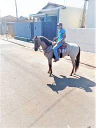 Vendo cavalo inteiro ou troco por manga larga
