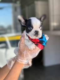 Bulldog Fraçês com auxilio veterinario * - Fixo (11) 26707791