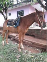 Vendo cavalo 5 anos de idade