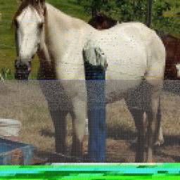 Cavalo manga larga registrado!!
