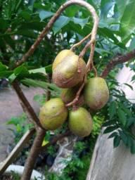 Frutíferas (Aproveite)