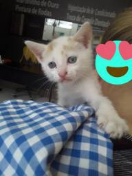 Doação gato filhote 2meses