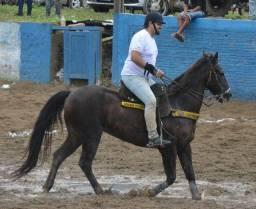 Cavalo de puxar (direita)