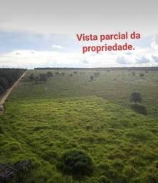 Procuro Propriedade Rural para arrendamento 300 hectares