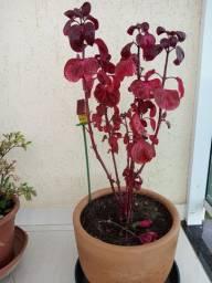 Linda Planta em Vaso de Ceramica