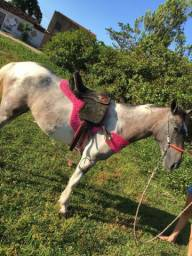 Porda Paint Horse