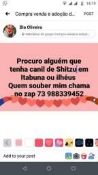 Procuro alguem que tenha canil Shitzu em ilhéus ou Itabuna