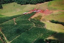 Fazenda Formada em Café Boa Esperança Minas Gerais 109 Hectares Café e Gado
