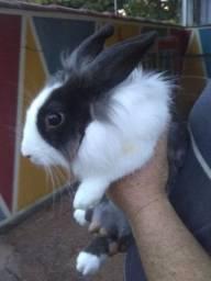 DOAÇÃO de filhote de coelho