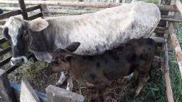 Mimi vaca