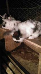 Filhotes de coelho peludos