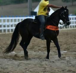 Cavalo puro de esteira, papel na mão, valor negociável