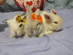 Fuzzy lop mini