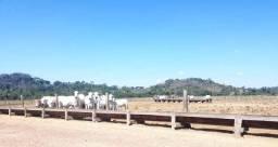 Fazenda 3.097 ha N.Monte Verde MT