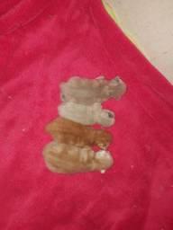 Filhotes de gato persa (correia pinto sc)