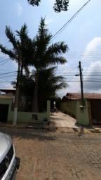 Doação de palmeira imperirial