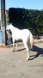 Cavalo capado
