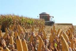 Nova Fronteira Agrícola - Sul do Pará (Soja e Gado)