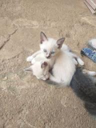 Doa se gatinhos com 02 meses de nascidos.