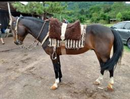 Cavalo zaino queimado