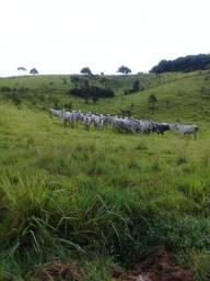 Vendo fazenda  85 Hécatares