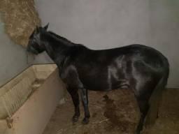 Cavalo ponei
