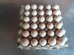 Ovos de Ayam Cemani / Preço Especial / Fone e Whats
